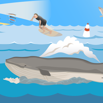 Despite Bear Market, Whales Accumulated More Crypto in 2018